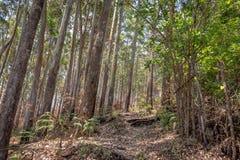Traînées de forêt dans le ghat occidental profond photo stock