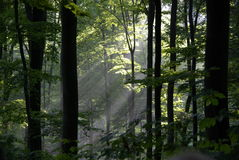 Traînées de lumière du soleil photos stock