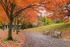 Traînées de marche et faisantes du vélo de parc dans l'automne Photographie stock libre de droits