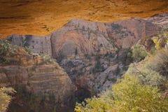 Traînées incroyables de Zion National Park Images stock