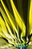 Traînées jaunes Photos libres de droits