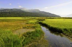 Traîne le marais en Alaska Photographie stock libre de droits