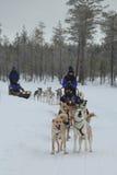 Traîneau de chien enroué courant en capitale finlandaise Rovaniemi de la Laponie Images libres de droits