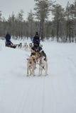 Traîneau de chien enroué courant en capitale finlandaise Rovaniemi de la Laponie Photos libres de droits