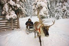 Traîneau de renne de la Laponie d'hiver emballant dans Ruka en Finlande Photographie stock libre de droits