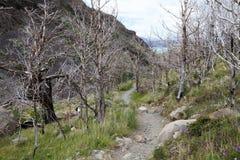 Traînez à Grey Hut en parc national de Torres del Paine, région de Magallanes, Chili du sud photographie stock libre de droits