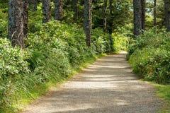Traînez à l'intérieur de la forêt en parc d'état de déception de cap Washington Etats-Unis photos libres de droits