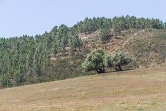 Traînez à la montagne avec les arbres et la végétation de Sobreiro photos stock