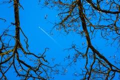 Traînez d'un avion en ciel bleu, silhouettes des arbres sur le SI images libres de droits