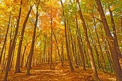 Traînez dans des couleurs de forêt d'automne photographie stock
