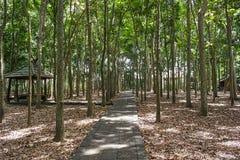 Traînez dans la forêt de singe d'Ubud, île de Bali photo stock