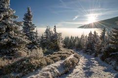 Traînez dans la forêt 2, horaire d'hiver, montagnes géantes, République Tchèque Images libres de droits