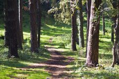 Traînez dans la forêt, le temps ensoleillé, route à l'aventure photos libres de droits