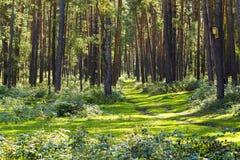 Traînez dans la forêt, le temps ensoleillé, route à l'aventure photos stock