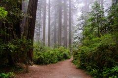 Traînez dans la forêt, parc national de séquoia, la Californie Etats-Unis Image libre de droits