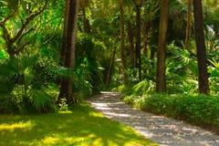 Traînez dans la jungle tropicale pendant l'après-midi Tropique en parc Route en pierre dans la forêt photo libre de droits