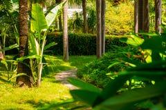 Traînez dans la jungle tropicale pendant l'après-midi Tropique en parc Route en pierre dans la forêt photos stock