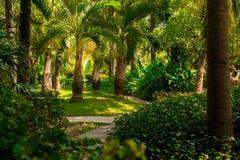 Traînez dans la jungle tropicale pendant l'après-midi Tropique en parc Route en pierre dans la forêt photographie stock