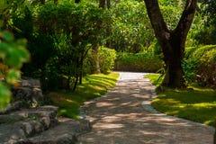 Traînez dans la jungle tropicale pendant l'après-midi Tropique en parc Route en pierre dans la forêt photo stock