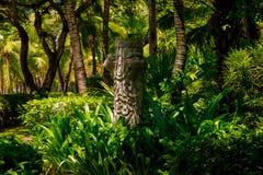 Traînez dans la jungle tropicale pendant l'après-midi Tropique en parc Route en pierre dans la forêt images stock
