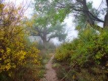 Traînez dans le brouillard d'octobre images libres de droits