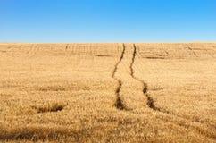 Traînez dans le domaine de blé mûr à l'horizon et au ciel bleu d'espace libre Image stock