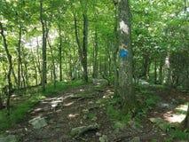 Traînez dans les bois avec des arbres et des roches et la marque bleue sur l'arbre images stock