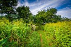 Traînez dans un pré au briquet Gap, en parc national de Shenandoah, Vi photographie stock