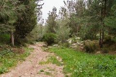 Traînez dans une belle forêt au temps de jour en Israël photos stock