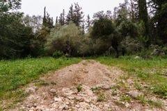 Traînez dans une belle forêt au temps de jour en Israël images libres de droits