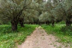 Traînez dans une belle forêt au temps de jour en Israël image libre de droits