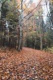 Traînez dans une belle forêt d'automne, la terre est complètement couverture photo stock