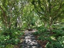 Traînez en parc dans la forêt avec un banc photos stock