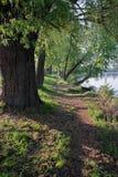 Traînez l'étirage le long du rivage du lac Matin ensoleillé tôt de ressort photographie stock