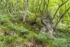 Traînez la marque sur le chemin au gora de Grmada et de Smarna, une hausse populaire photographie stock