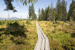 Traînez le long des passages couverts en bois par la bruyère en montagnes de Krkonose, République Tchèque photos stock