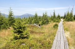 Traînez le long des passages couverts en bois par la bruyère en montagnes de Krkonose, République Tchèque images libres de droits