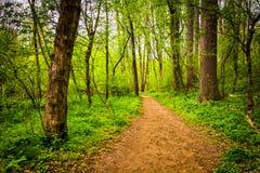 Traînez par la forêt au Central Park du comté de Lancaster, Penns photographie stock