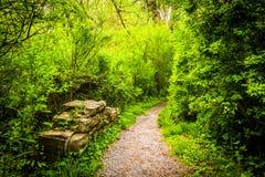 Traînez par la forêt au parc de forêt vierge, Harrisburg, Pennsylva photographie stock libre de droits