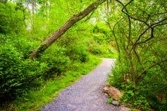 Traînez par la forêt au parc de forêt vierge, Harrisburg, Pennsylva image stock