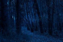 Traînez par une forêt fantastique de nuit d'automne photos stock