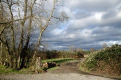 Traînez pour lâcher le secteur en parc de Marymoor Photos libres de droits