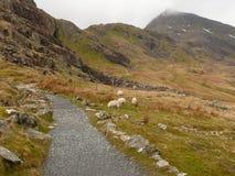 Traînez sur le snowdon, snowdonia, Pays de Galles, R-U Images libres de droits