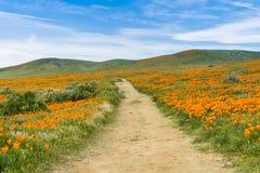 Traînez sur les collines de la vallée la Californie Poppy Reserve d'antilope pendant le temps de floraison image stock