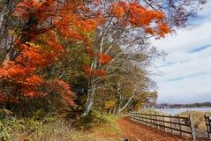 Tra?n?es de marche au lac Yamanaka pendant la saison d'automne du Japon photos stock