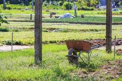 Tra Que by, Quang Nam landskap, Vietnam Arkivfoto