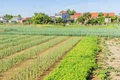Tra Que village, Hoi An, Vietnam. Morning, Organic vegetable in Tra Que village near Hoi An old town, Vietnam. Tra Que village where biological vegetable Royalty Free Stock Photos