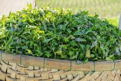 Tra Que village, Hoi An, Vietnam. Organic vegetable in Tra Que village near Hoi An old town, Vietnam. Tra Que village where biological vegetable cultivation. Hoi Stock Photography