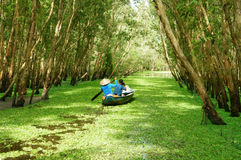 Tra Su靛蓝森林,越南生态旅游 免版税库存图片