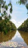 Tra Su översvämmad skog Arkivbilder